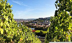 Würzburg Überblick Weinberg
